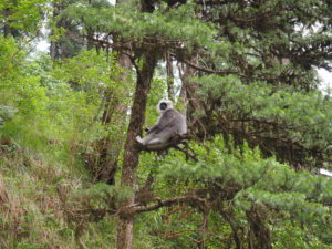 Monkey in the nature reserve behind Wildflower Hall